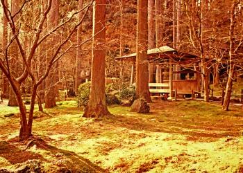 寺,日本庭園,和,冬,屋外,ヴィンテージ