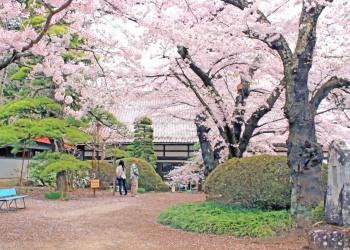 神社,日本庭園,屋外,晴れ,春