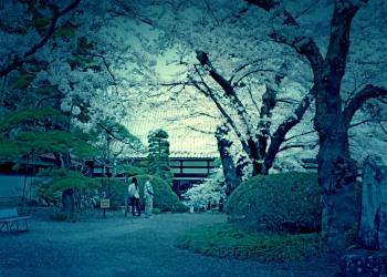 神社,日本庭園,屋外,晴れ,春,ホラー