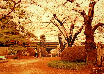 神社,日本庭園,屋外,晴れ,春,ヴィンテージ
