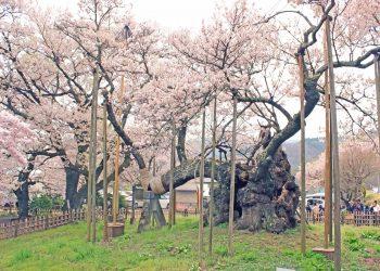 寺,日本庭園,和,屋外,春