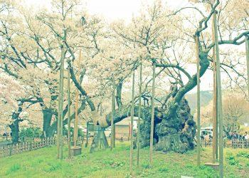 寺,日本庭園,和,屋外,春,昭和レトロ