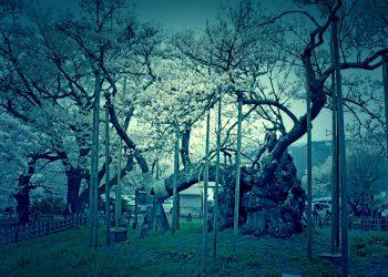 寺,日本庭園,和,屋外,春,ホラー