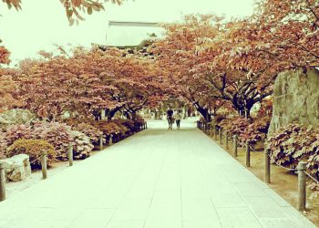神社,村,晴れ,夏,屋外,昭和レトロ
